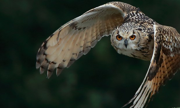 newtonmore-birdwatching